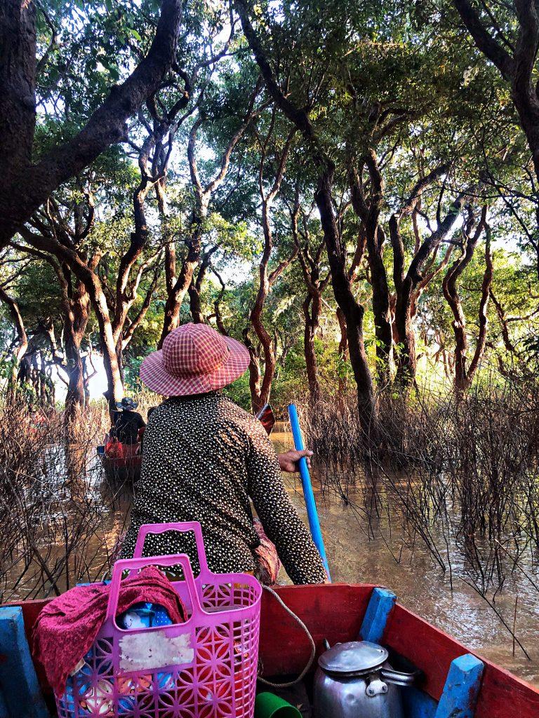 mangrovie-cambogia