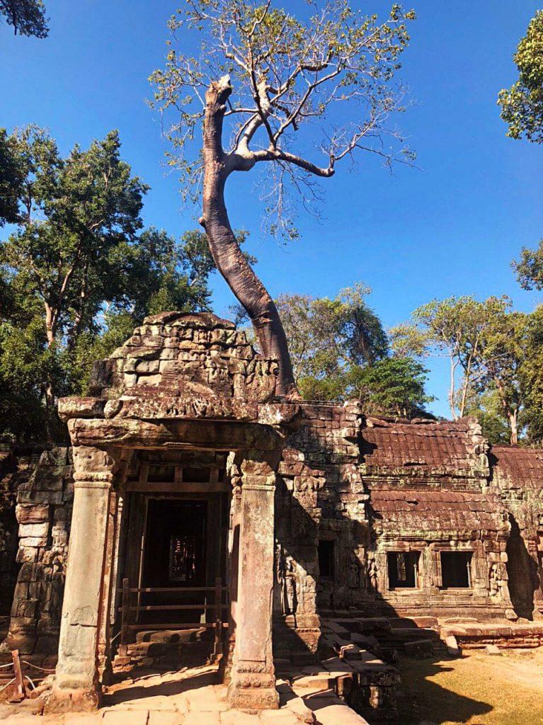 ta-prohm-cambogia