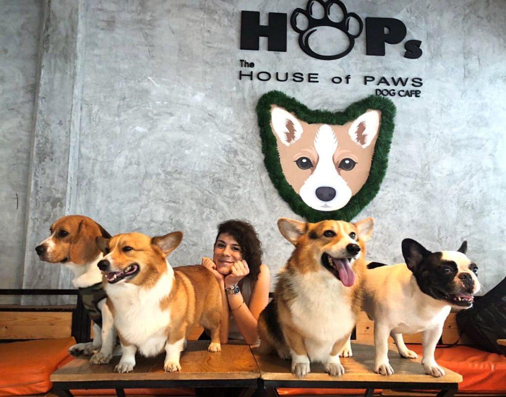 house-of-paws-bangkok